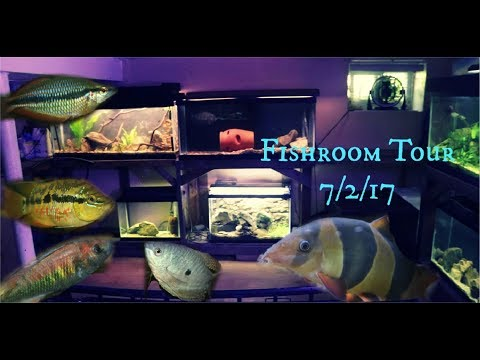A Look At My Fishroom