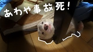 Is he trying the way the ferret kills itself? -- □LINEスタンプʕ•̀ω•...
