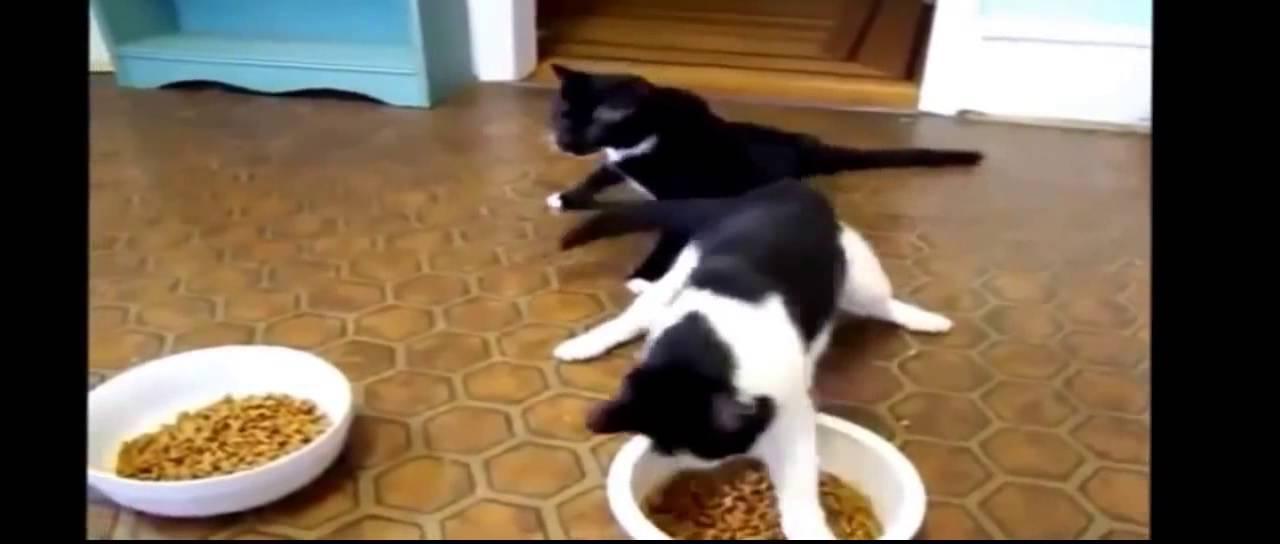 Два пьяных кота Прикол! Смешное видео про котиков - YouTube