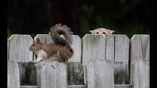KITTENS Trying To Befriend SQUIRRELS - Cute Kitten And Funny Squirrel Videos Compilation 2018
