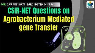 CSIR NET SOLVED QUESTIONS || Agrobacteium mediated gene transfer (Part-2)||