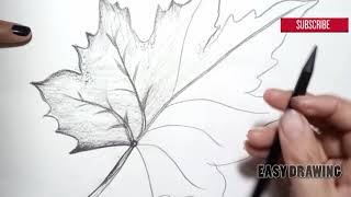 How to Draw Leaf    Pencil shading drawing