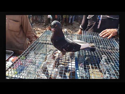 Delhi jama masjid sunday kabutar market 2018   18-03-2018