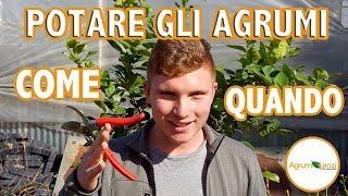 Download lagu POTARE GLI AGRUMI - AGRUMI LENZI