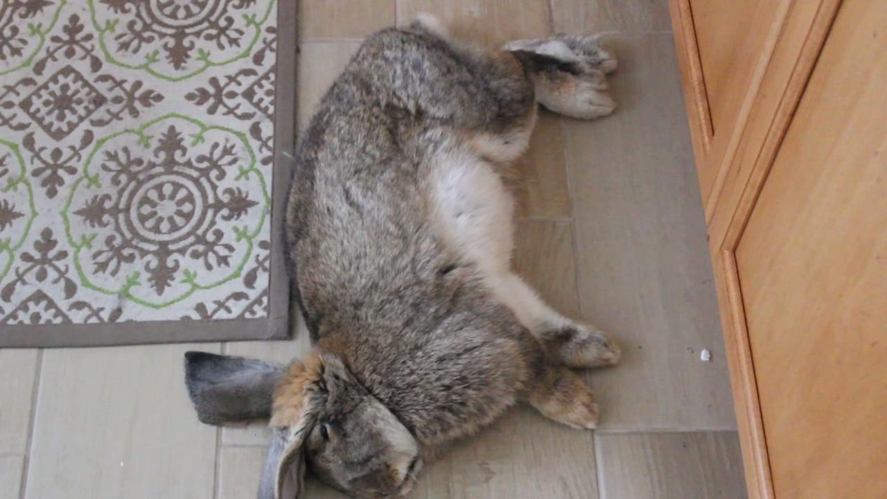 how to make my rabbit sleep