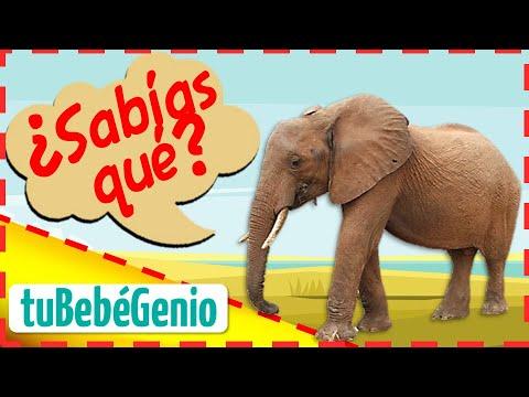 SABIAS QUE El Elefante Caractersticas Del Elefante Para Nios