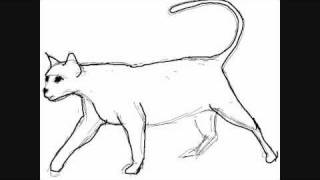 How to draw a cat walking  - Things to Draw