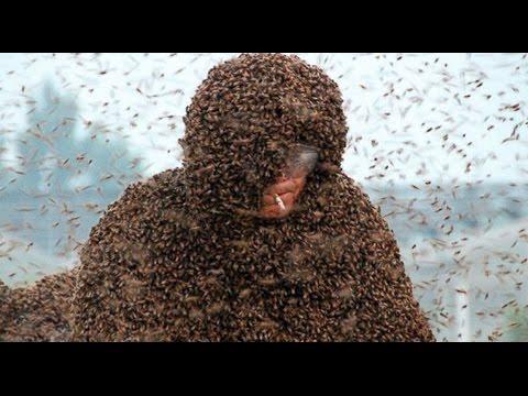 Bee Attacks! | 6 UnBEElievable Stories | ABC News Remix