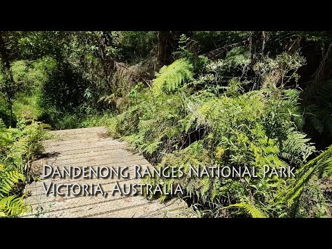 Dandenong Ranges National Park 9 mins walking, 2 lizards, 1 bird
