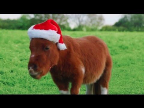 Amazon Prime 'Little Horse' Christmas edition - Little Donkey
