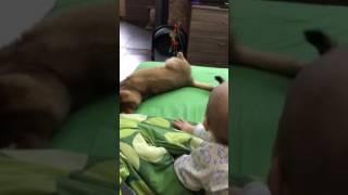 Ребенок  6 месяцев и кот играют