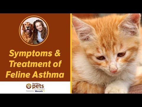 Symptoms & Treatment Of Feline Asthma