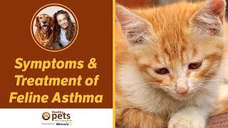 Symptoms Treatment Feline Asthma