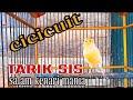 Masteran Pancingan Kenari Paud  Mp3 - Mp4 Download