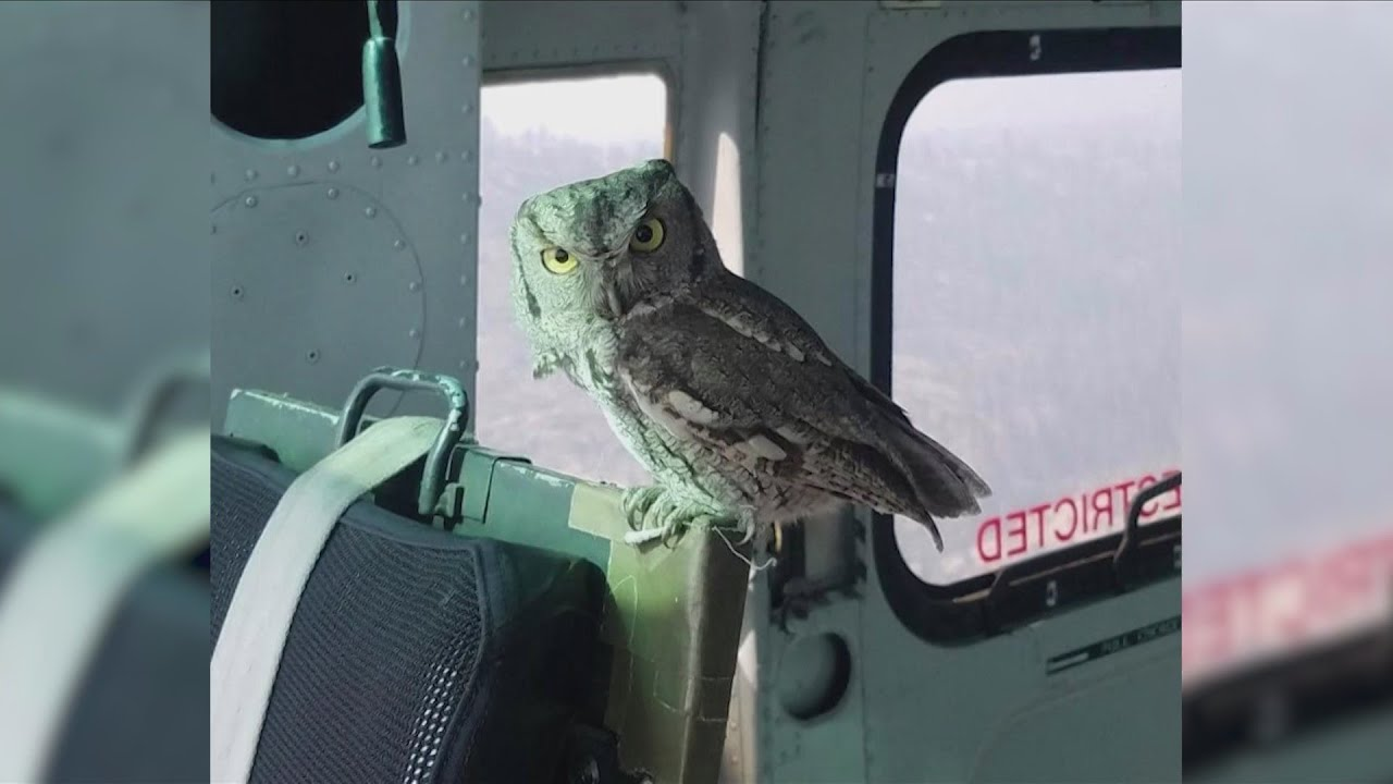 "KSEE 24 News Owl lands in Creek Fire helicopter: ""One in a million shot. That guy should but a lotte"