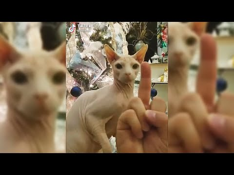 BEST Cat Memes Compilation of 2020 | FUNNY CATS