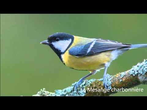 les chants d'oiseaux