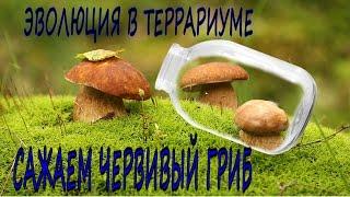 Вечный террариум как у сливки шоу/ ПЕРЕЗАГРУЗКА