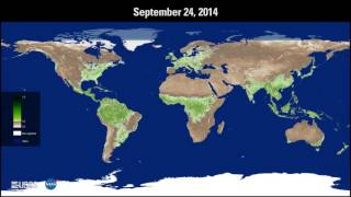 Progression of Global Vegetation