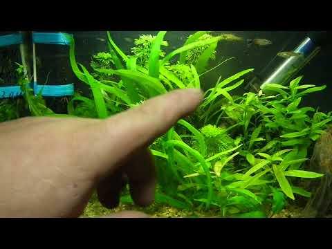 Как правильно кормить рыбок. Чем кормить рыбок.