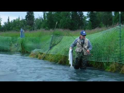 First timers get help fishing the Kenai River Sockeye Salmon run Larry From Washington