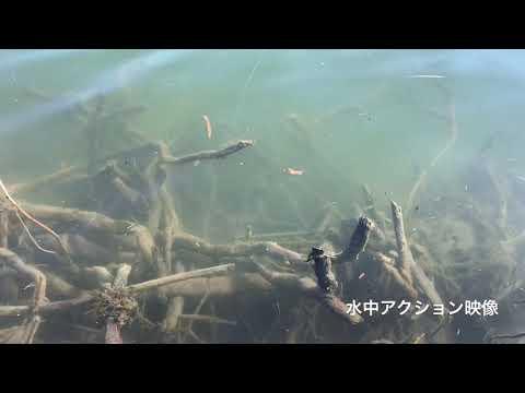 fishingmax三宮店 淀川バス釣りについて