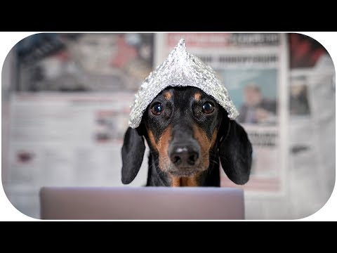 Big Brother is watching you! Funny dachshund dog video!