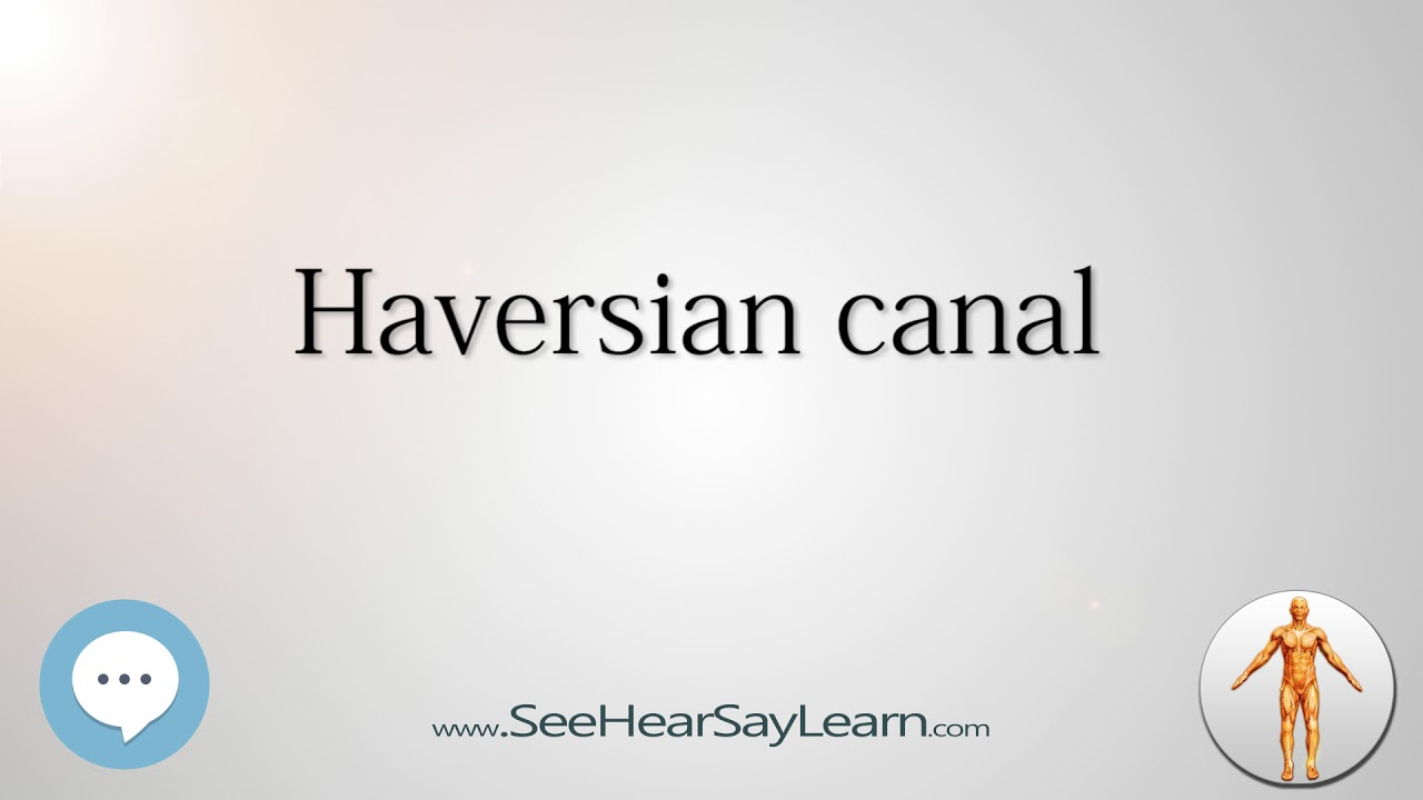 Haversian Canal Anatomy Named After People Youtube