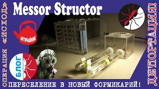 Муравьи Messor Structor. Пересадка в новый формикарий