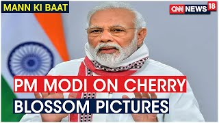 PM Modi: Internet Flooded With Cherry Blossom Images From India's Shillong Not Japan | CNN News18