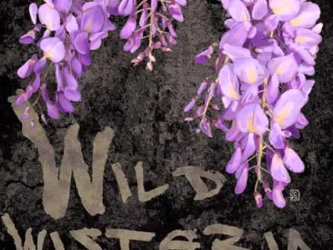 Shine - Collective Soul - Cover by Wild Wisteria Band