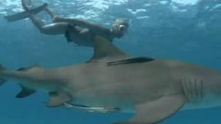 Diving with sharks on Top Billing (FULL INSERT)