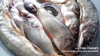 Сушим рыбу - окунь, щука, язь
