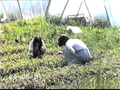 Пионерский лагерь Снегири лето 1991 года Зарница часть 4