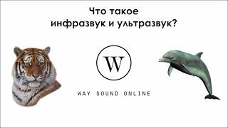 Что такое инфразвук и ультразвук? / Просто о сложном