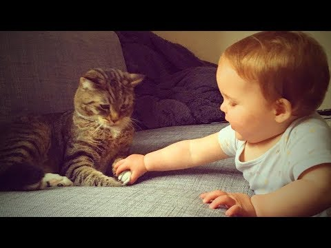 Cats and Babies 🐱👶 Cute Babies Playing with Cats (Part2) [Epic Life]
