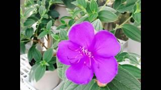 #Spring #Summer #Garden #Botanical #BotanicalGarden #Red #Flower #Flowers #Exotic #Plants #Plant #
