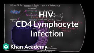 How HIV infects us: CD4 (T-helper) lymphocyte infection | NCLEX-RN | Khan Academy