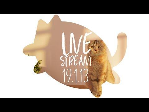 생방송-수리노을-고양이가족-2019년-1월-13일-live-suri
