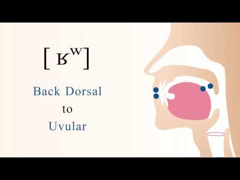 [ ʁʷ ] voiced labialized dorsal uvular non sibilant fricative