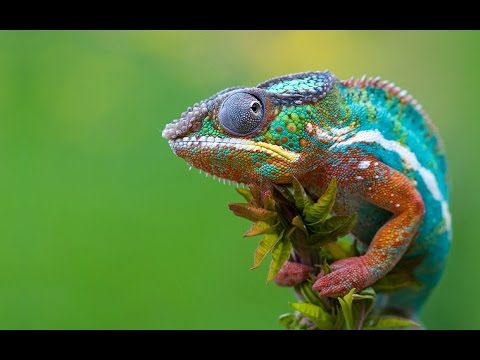 Вопрос: Какие животные имеют пятнистую расцветку?