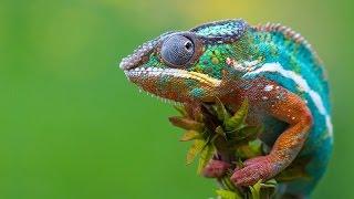 Топ 10 животных меняющих цвет
