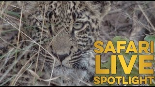 Royal Leopards of Djuma: The Next Generation thumbnail
