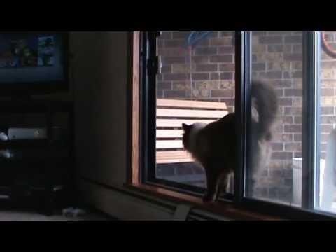 Cat Escapes