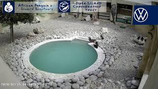 - African Penguin \u0026 Seabird Sanctuary