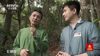 [远方的家]行走青山绿水间 穿越季雨林 循声觅猿  CCTV中文国际