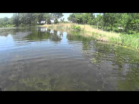 Busse Woods Bass Fishing
