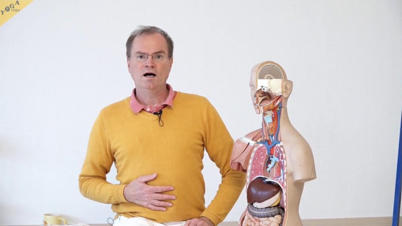 Das Atmungssystem – YVS341 – Wirkung von Yogaübungen - YouTube