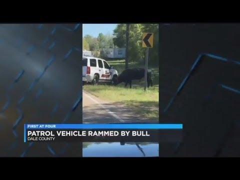 Watch Angry Bull Ram Alabama Deputy's SUV