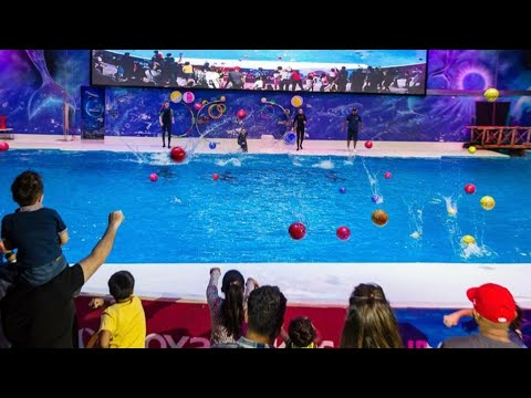 Dubai Dolphinarium   Best of the Dubai Dolphin Show HD   Seal Show   Best places to visit in Dubai